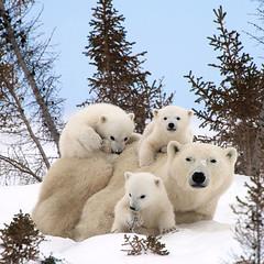 animal family001