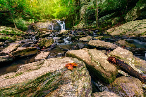 nature leaves landscape waterfall nikon rocks waterscape d810