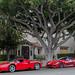 Ferrari Enzo & 599XX