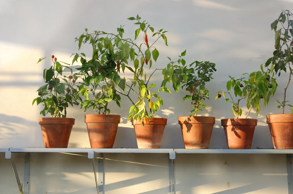 A GREENHOUSE 7