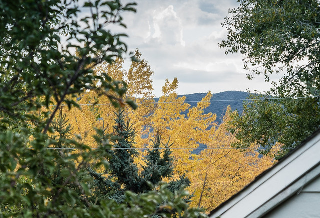 Prescott Fall Color: Cottonwood behind Pine