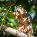 Hangover Squirrel