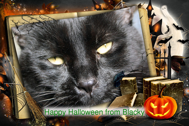 Happy Halloween From Blacky... 31/10/2014..
