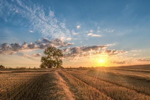 trees tree field lines clouds sunrise landscape denmark countryside crop hdr highdynamicrange goldenhour goldenlight odsherred wheeltracks caughtinpixels jacobsurland