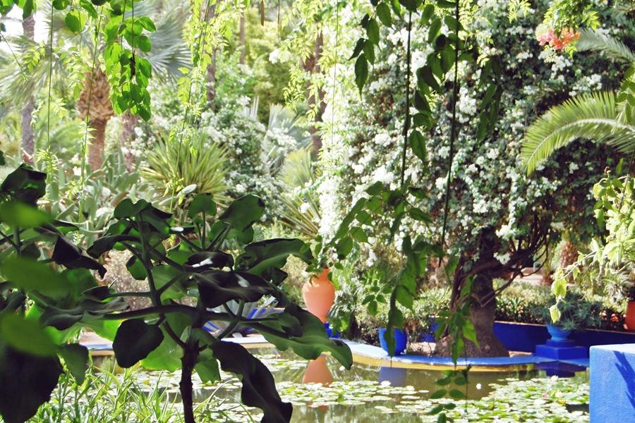 Jardin Majorelle (9)