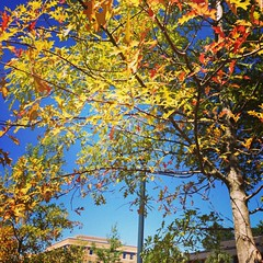 Fall is coming in South Carolina.   #USC