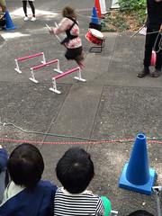 猿楽祭で猿回し見るとらちゃん 2014/10