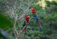 Bolivia - the jungle