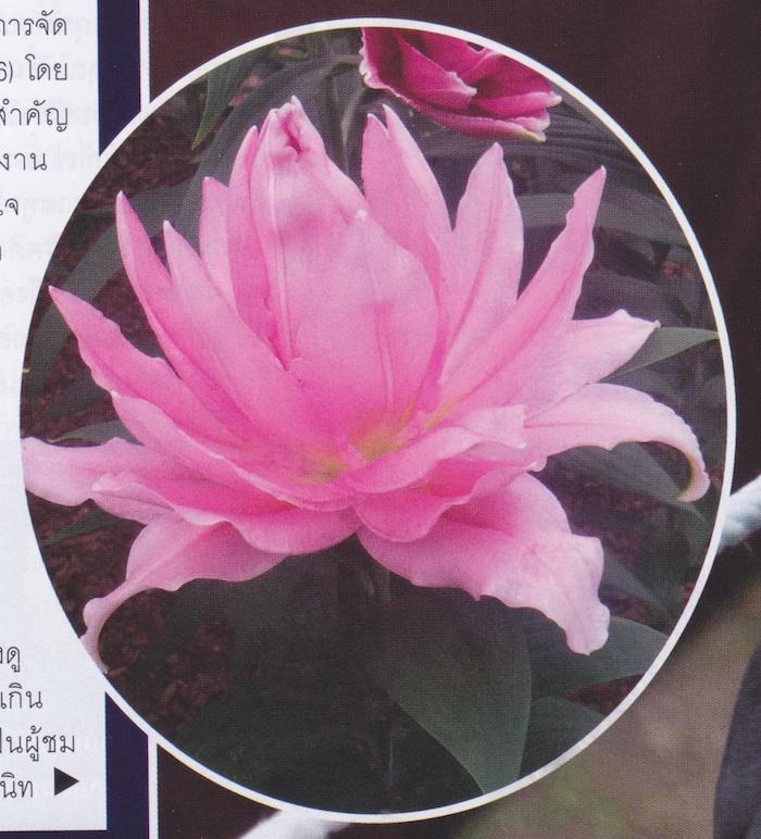 flower show 11B