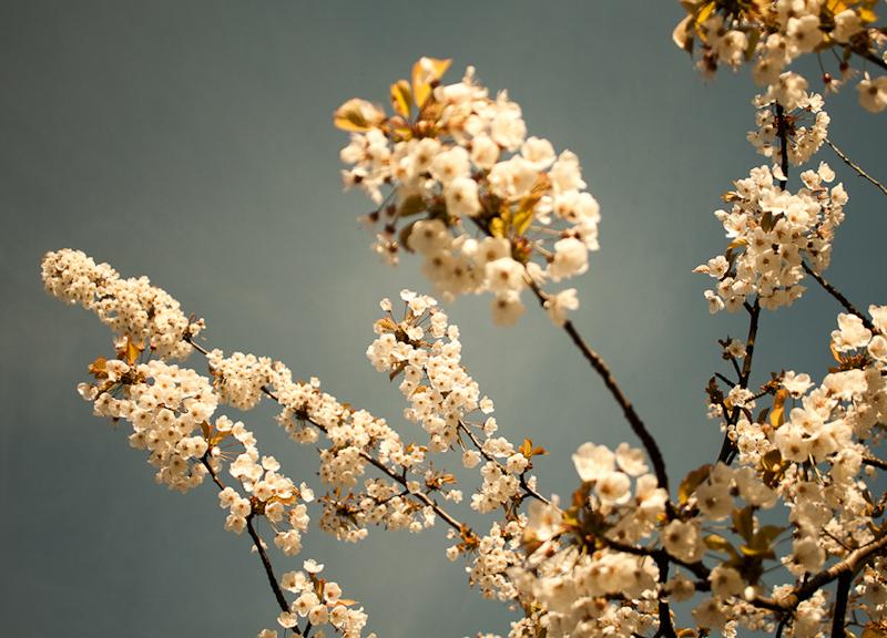 3672 Blossom