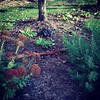 Love my little front yard #gardening #plantfever