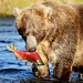 Brown bear with dinner by sailingsue