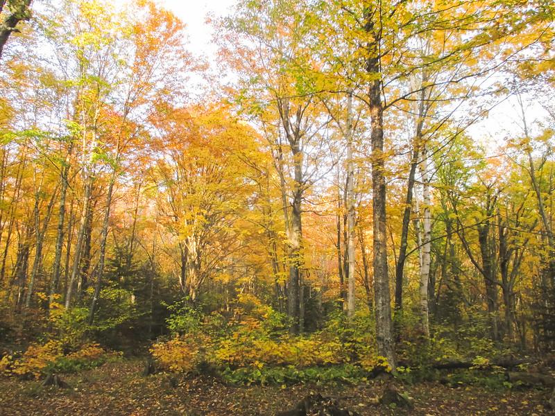 Cut Log Campsite on SHT in Cascade River State Park
