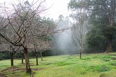 Olinda Garden
