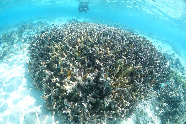 09212104 Eck Coral
