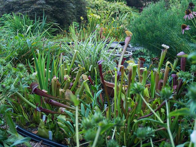 Bog Garden 2