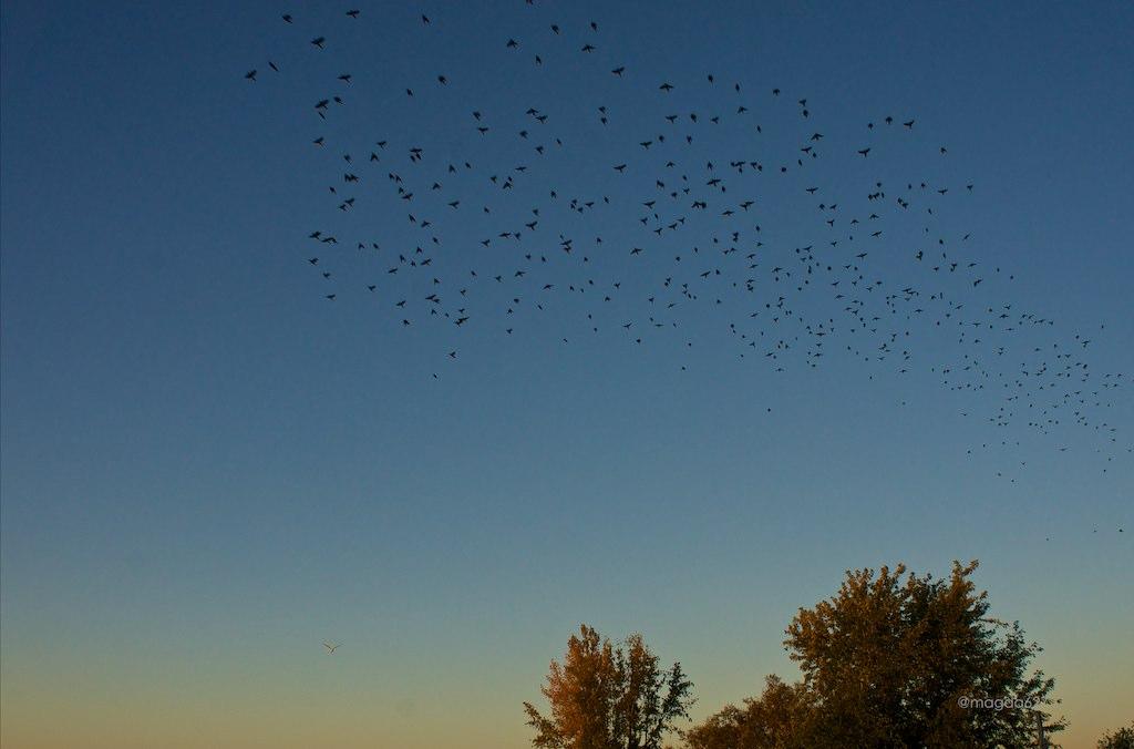 anteketborka.blogspot.com,  birds 5