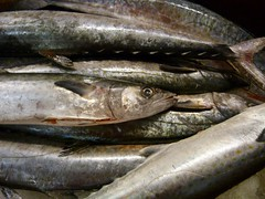 animal, fish, fish, sauries, fauna, oily fish, food, shishamo, milkfish,