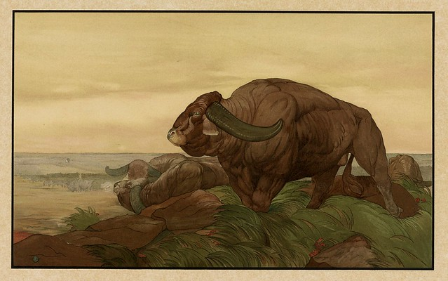 009-El regreso de la manada de bufalos-Sixteen illustrations of subjects from Kipling's Jungle Book-1903 -Library of Congress