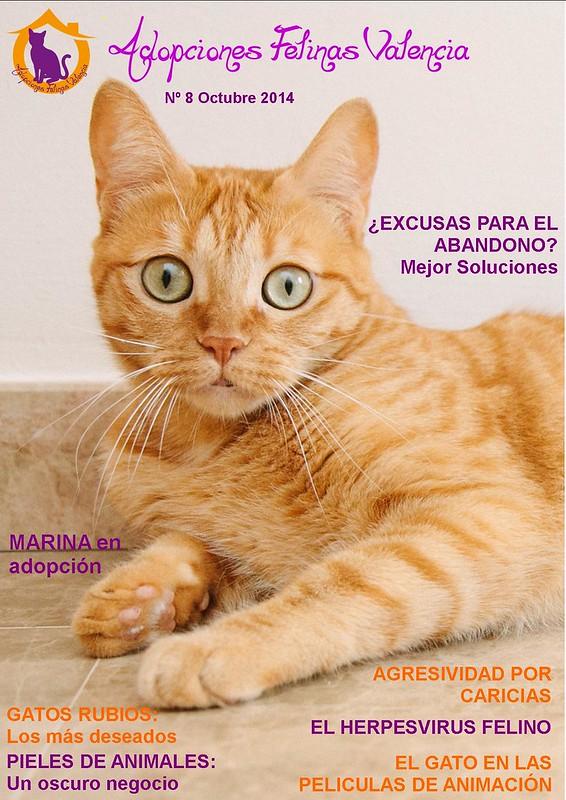 Revista nº 8 Octubre 2014: Gatos rubios: los más deseados. ¿Excusas para el abandono? Mejor soluciones. 15471274706_06f67c6520_c