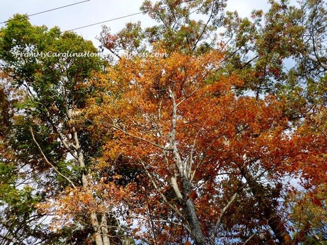 Fall Driveway 2014 1