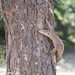 uttampegu posted a photo:Monitor Lizard and camouflage at Tal Chhapar, Rajasthan