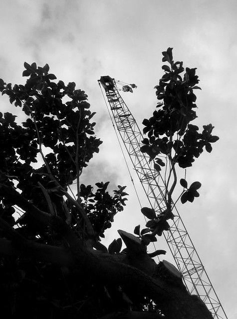 Industrial Crane and Tree Leaves