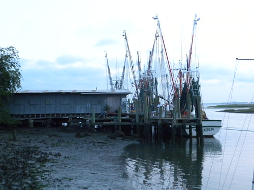 boats floating tied moored mud tide lowtide carolina charleston mast net money work business labor grass marsh estuary economy shed morgan dock shrimp bateau boot love camera vision see view life weather crabs smell