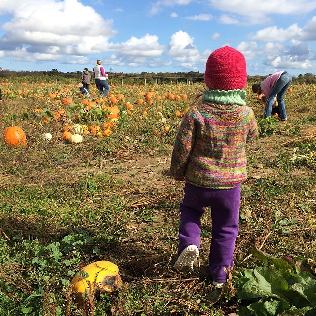 Into the pumpkin patch.