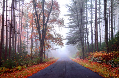 road street autumn autumnfoliage trees mist fall nature colors fog rural forest woodland landscape highway scenery seasons massachusetts rustic scenic newengland fallfoliage foliage wilderness vacations countryroad wetland quabbinreservoir scenicroad oad moodysky