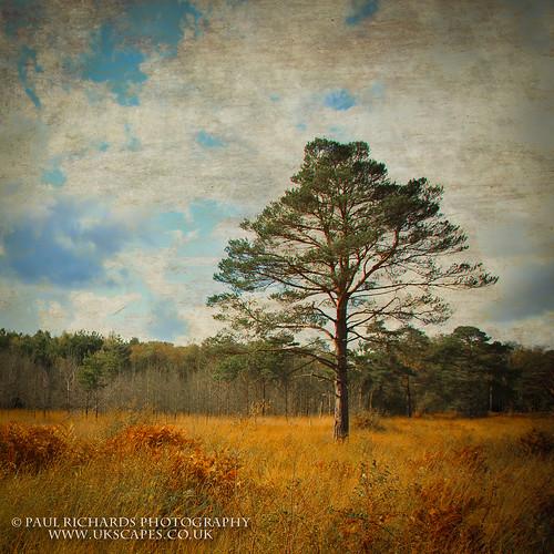 park country berkshire calafornia sssi longmoore