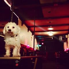 Puff the dog at #therepub