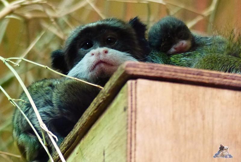 Tierpark Berlin 26.10.2014 121