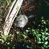 Oh to be a turtle sunbathing on a floatin island legs outstretched! #lewisginter