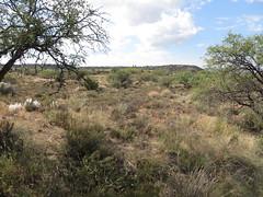 Landscape Surrounding Montezuma Well, a Unit of Montezuma Castle National Monument, Rimrock, Arizona