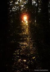 森を好きです!! - Amo il bosco!!