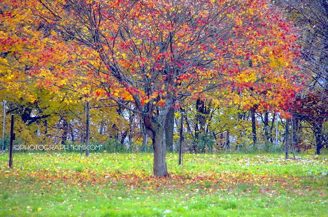 ぶどうヶ丘公園紅葉1