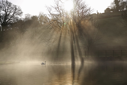 rays sunrise winter morning cold mist dawn lake reflection shadow swan