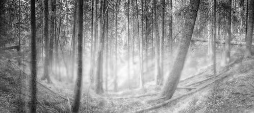 lemmenlaakso järvenpää finland suomi kevät spring luonto luontokuva luonnonvalokuvaus naturephotography nature panorama panoraama blackandwhite mustavalkoinen mustavalkokuva landscape landscapephotography maisema maisemakuva maisemakuvaus metsä forest geotagged