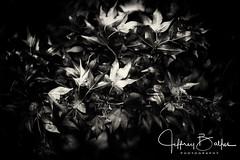 Sony A7R2 Flowers Album