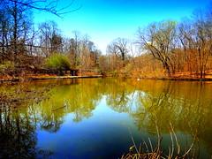 Spring Lake Reflection