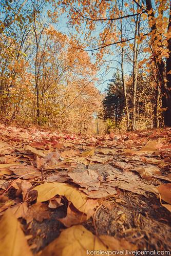 Autumn-052