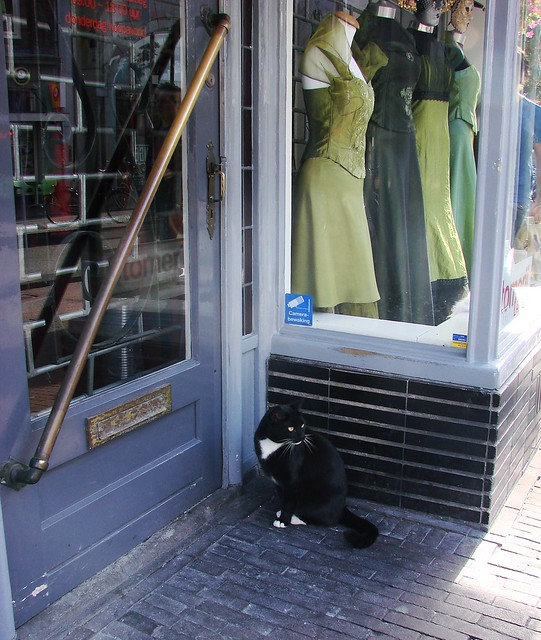 Voorstraat Tailor's Cat