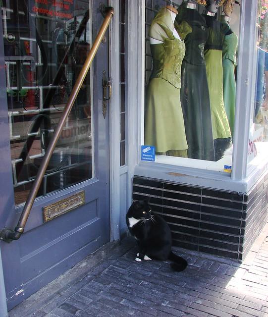 Voorstraat Tailor's Cat