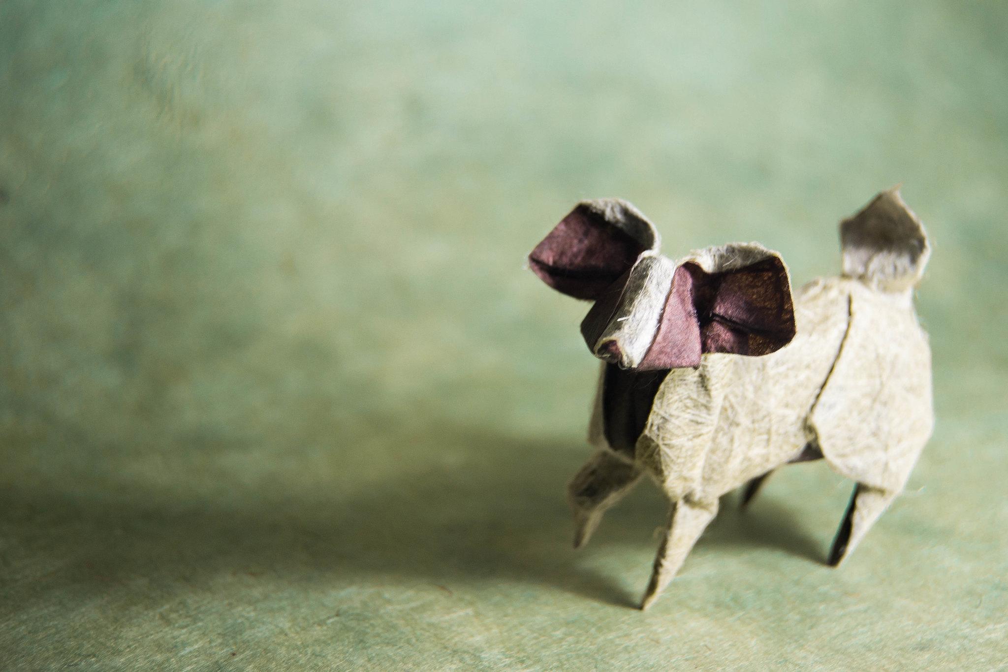 Origami Papillon Dog - Miyajima Noboru