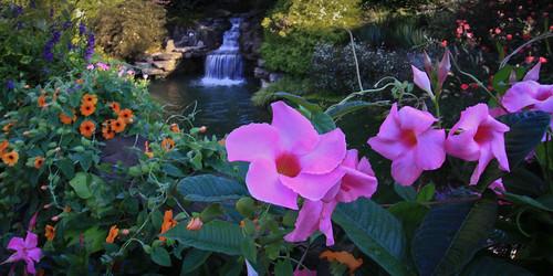 flowers georgia waterfall ballground gibbsgardens gibbsgarden
