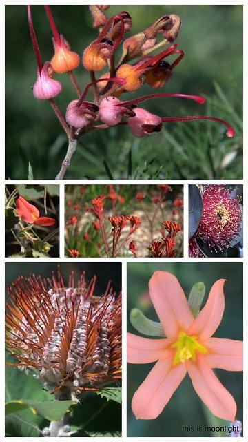 12-wildflowers 20144