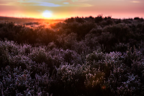 Sunrise at the Big Moor // 05 10 14