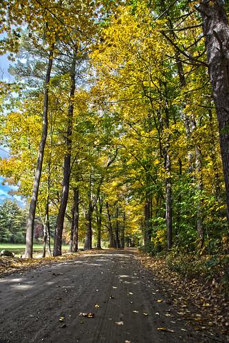 autumn trees fall leaves vermont foliage brattleboro