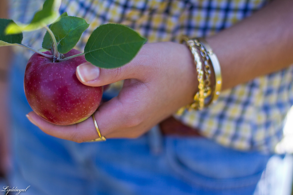 plaid shirt and denim shorts for apple picking-3.jpg